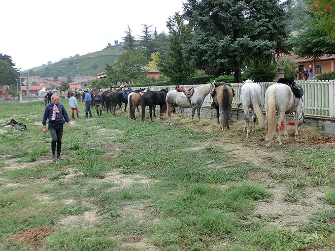Trekking a cavallo in Piemonte: immagine del primo Viaggio nelle Langhe